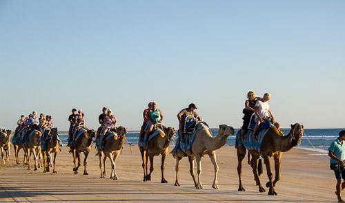 bali camel safari wisata naik unta