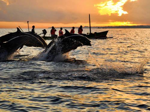 dolphin di pantai lovina bali